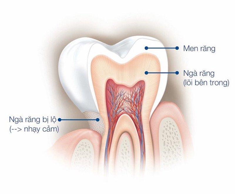 Men răng làm mộ trong 4 thành phần cấu tạo nên răng và nằm ở lớp ngoài cùng