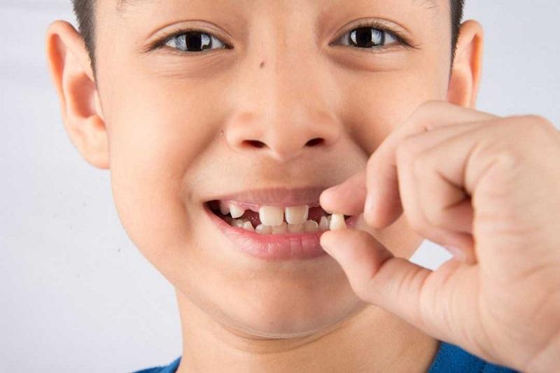 Cha mẹ hãy tác động vào phần chân răng của bé trước khi áp dụng cách nhổ răng sữa tại nhà
